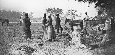 farm_slaves