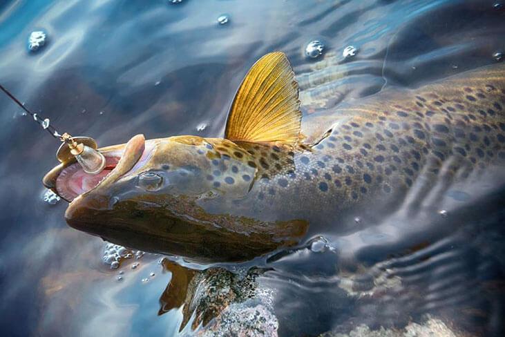 Spinning-fishing-for-steelhead