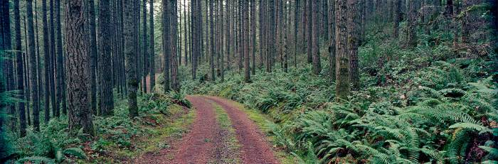 forest_property_land_sales_brokerage_alt