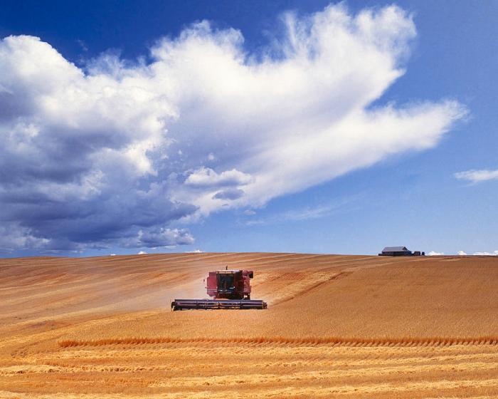 wheatharvesting-wheat-field-in-oregon-buddy-mays